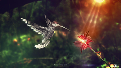 Wallpapers For Moving Hummingbird Wallpapers