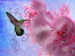 Animals For Pretty Hummingbirds Wallpapers
