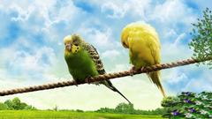 Wildlife Photos Lovebirds Pictures