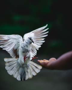 rock dove flying beside hand photo Bird Image on Unsplash
