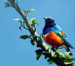 Wallpapers Birds Superb Starling Branches Animals Painting Art