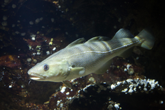 EU fisheries ministers ignore science and approve