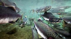 Salmon Fishing Wallpapers