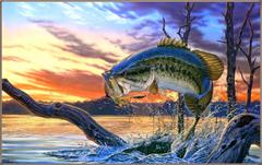 Salmon Wallpapers HD