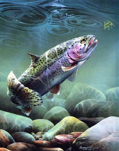 Fly Fishing Trout Graphics Code
