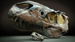 Want a neat dino fossil wallpaper Here you go