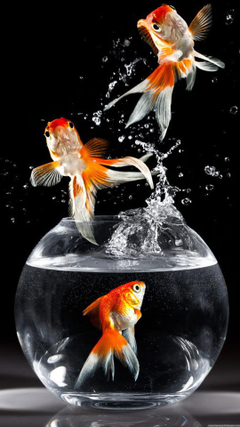 Best Inspirational High Quality Goldfish Backgrounds