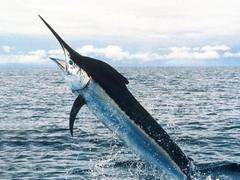 swordfish wallpapers