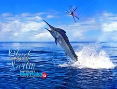 Marlin Fishing Wallpapers