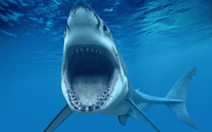 Shark Tooth Wallpapers