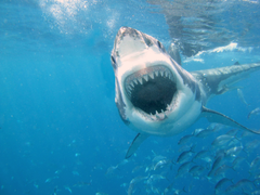 The 13 Most Awesome Wallpapers For People Who Love Shark Week