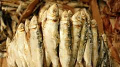 Sardines Pictures