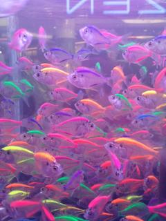 neon tetra fish aesthetic futuristic grunge
