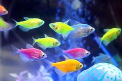 Tetra Fish Guide