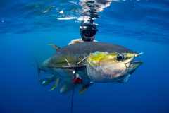 Spear Fishing Wallpapers High Quality