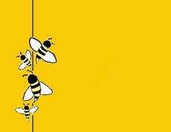 Bee Cartoon Wallpapers WallpapersIn4k HQ