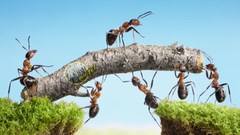 Hard Working Ants HD Wallpapers