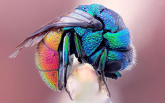 nature insects Bumblebee colors Wallpapers