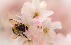 Wallpapers flower nature petals garden insect bumblebee