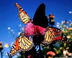 Love Wallpaper Butterfly Wallpapers