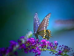 FunMozar Most Beautiful Butterfly Wallpapers