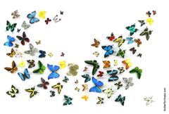 Butterfly Wallpaper Wallpapers Backgrounds Desktop