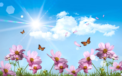Butterfly wallpapers desktop with high color