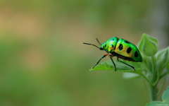 Nature insects leaves beetles