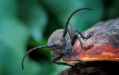 Wallpapers mushroom Beetle insect image for desktop