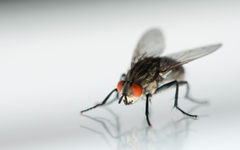 Macro photo of a grey and black Common Housefly HD wallpapers