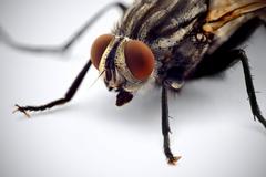 Macro photography of housefly HD wallpapers