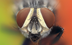 Macro photography of flies face animals nature insect HD