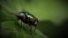 photography fly macro green bug insect blurred wallpapers and