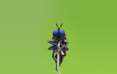 Wallpapers eyes macro fly insect sitting fly stem