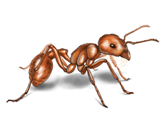 Ants HD Wallpapers