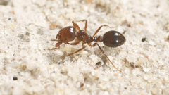 Floating fire ants form rafts in Houston floodwaters