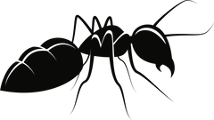 Insect clipart carpenter ant Insect carpenter ant