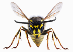 Best HD Wasp Wallpapers