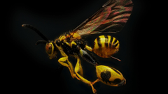 wasp 4K wallpapers for your desktop or mobile screen
