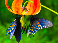 waspwednesday Butterfly Wallpapers