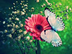 Blue Butterfly Wallpapers Normal