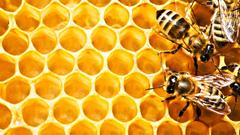 Honey Wallpapers Hd on WallpaperGet