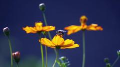 honey bees wallpapers