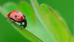 HD Wallpapers Of A Pretty Ladybird Beetle On A Green Plant