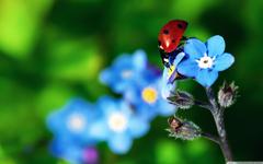 Ladybird Beetle 4K HD Desktop Wallpapers for 4K Ultra HD TV Wide