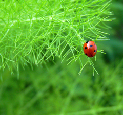 Best Desktop And Laptop Screen Wallpapers Of A Ladybird Beetle