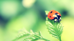 Beetle Tag wallpapers Beetle Bug Ladybird Picture Photo Insect