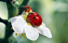 Ladybird wallpapers