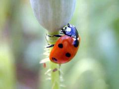 Beautiful Ladybird beetle photos