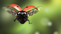 Image Ladybugs Flight Animals Closeup